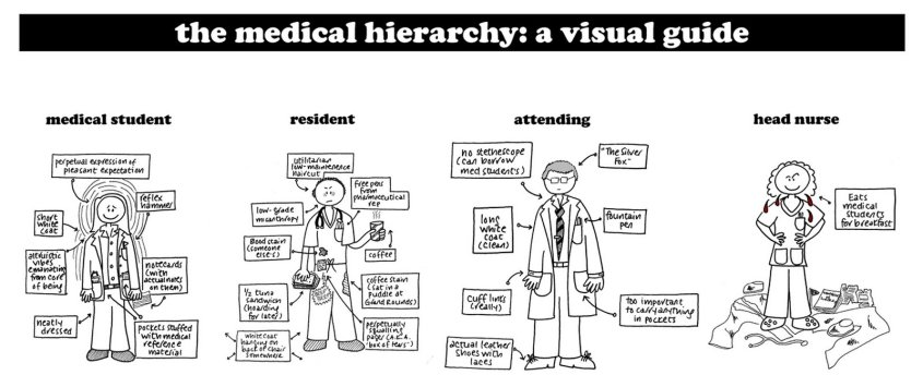 medical hierarchy