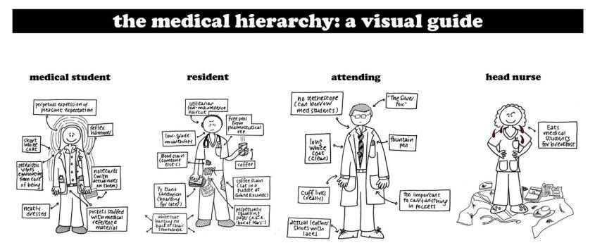 medical hierarchy